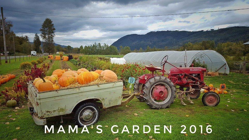 Mamas-Garden-2016.jpg