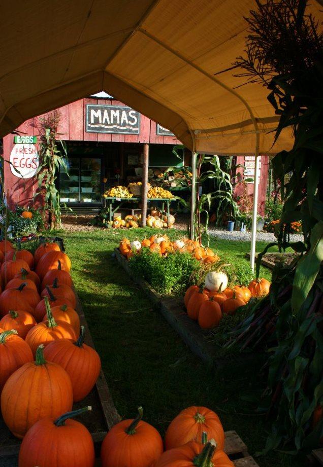 Pumpkins-Tent.jpg