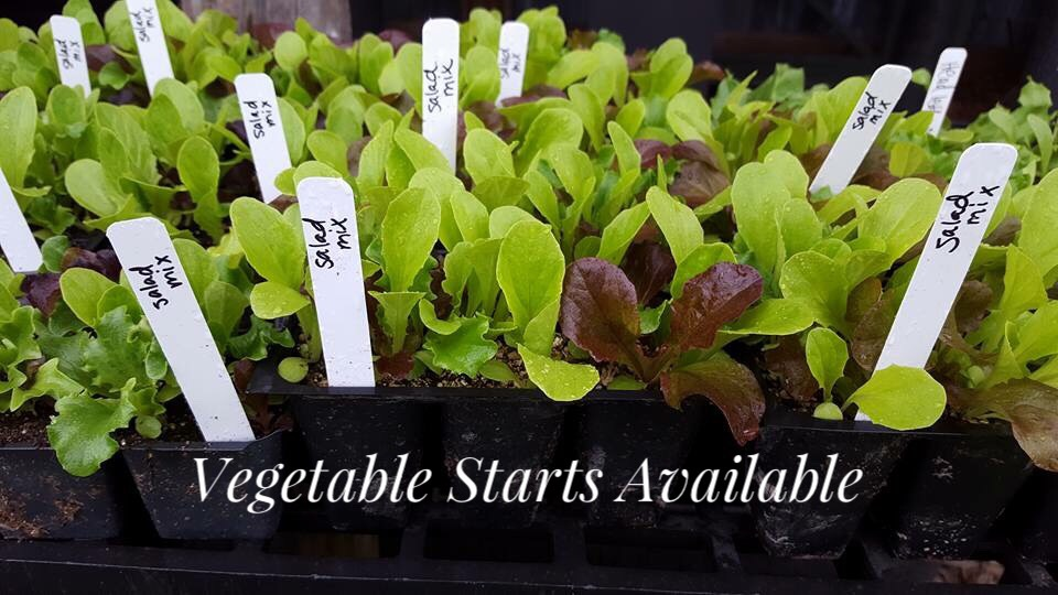 Vegetable Starts are here!