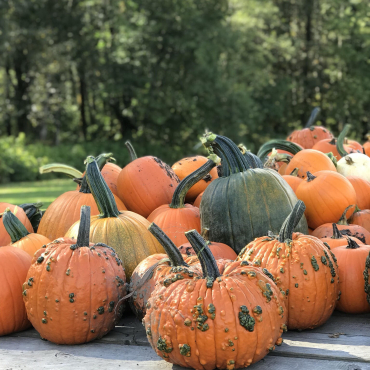 Mama's Garden Harvest Festival Oct 6-7th 2018 10-4pm