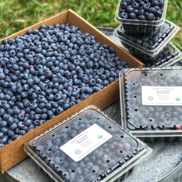 Blueberry U-Pick Opening July 22nd