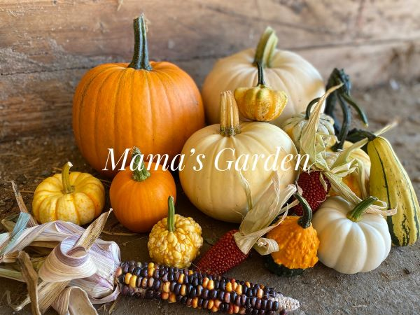 Annual Harvest Festival Canceled for this year..